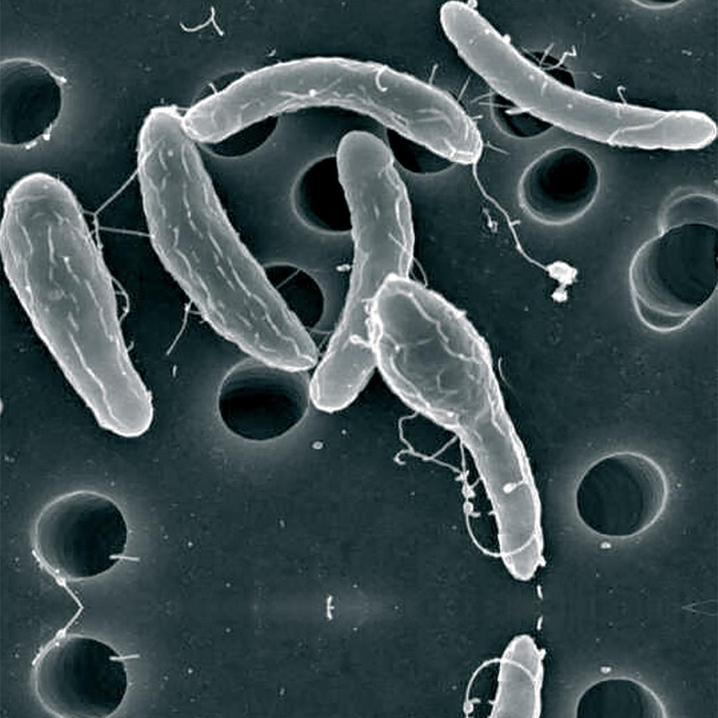 Bacteria in Water